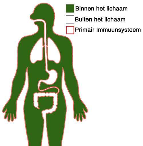 Primair immuunsysteem